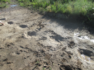 The trackway is rock covered by recent mud flow.