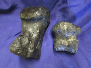 Large toe bone on the left and small toe bone on the right