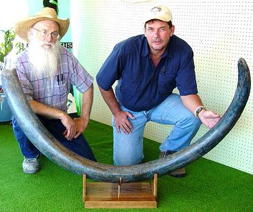 Blue Mammoth Tusks (2006 Archive) – Mt  Blanco Fossil Museum