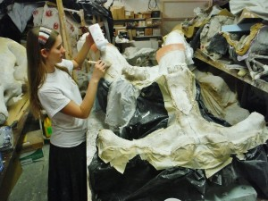 We have to apply baby powder to the newly made latex-rubber mold of part of the mastodon skull to keep it from sticking to itself and deforming. With all of the large, delicately pieced together parts of the skull, mold making is an important part of the restoration process to make sure everything gets put together correctly
