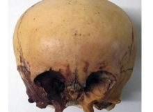 Star skull cast front view